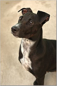 Bosco - photo courtesy of Christopher Kirk