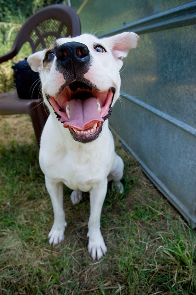 Buster A477079