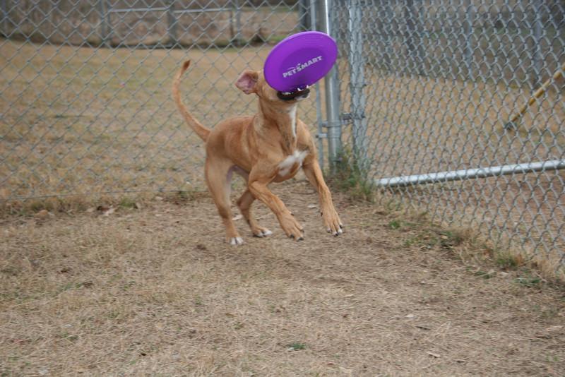 I love purple frisbees!