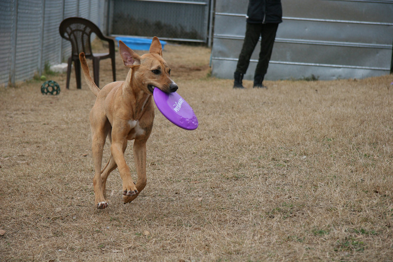 I love running with that frisbee!
