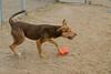 Lance A494168 photos