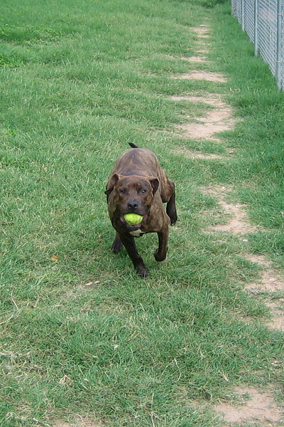 Leroy practices his running