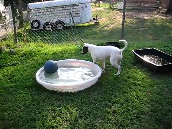Layla plays ball