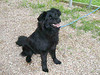 My name is J.D. I am a neutered male, black Border Collie mix. I am estimated to be 9 months old. I prefer a home with adults or older children.