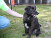 ADOPTED 3/28/07. Jessie is a spayed female black and red German Shepherd Dog mix. She is estimated to be 4 years old. Look for Jessie in Pen 046.