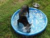 Nova likes to splash