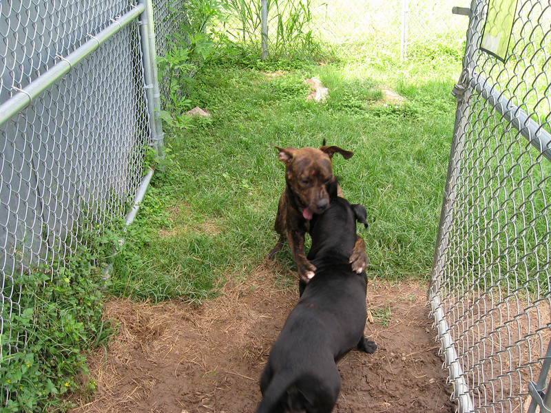 Leroy and Nova playing