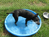 Nova cooling off in the pool