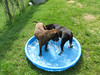 Nova and Leroy share the pool