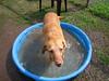 Rosie loves water.