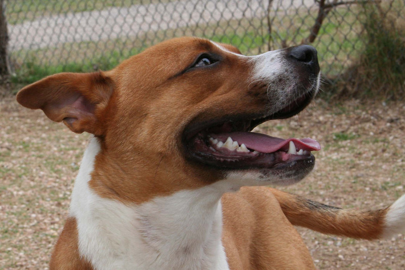 Terrence A499256