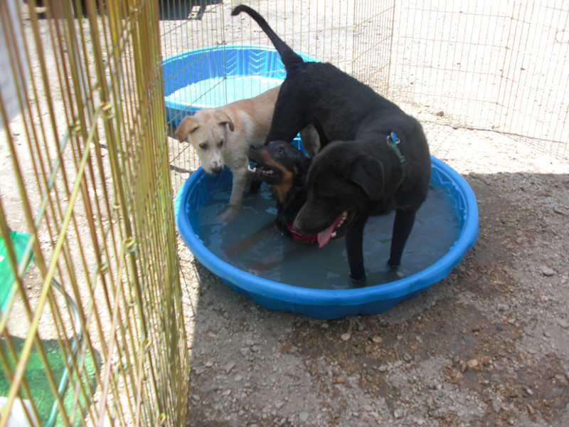Wylie, Foote, and ?? share the pool