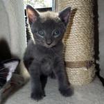 Austin Pets Alive!'s photo