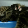 E1 litter with a surrogate momma, Gabby
