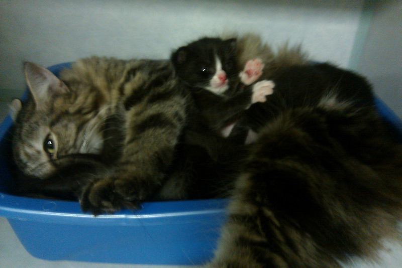 E1 litter with a surrogate momma, Gabby