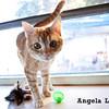 Philla, Angela Lozano, 11/5/10