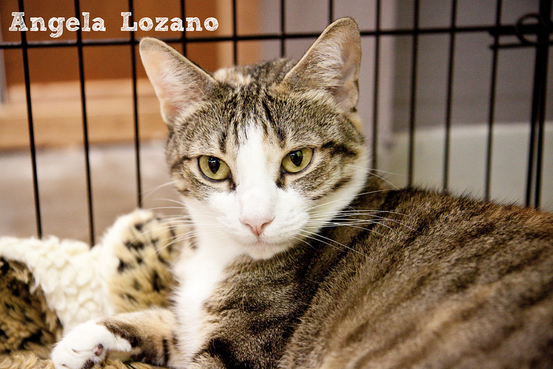 Mitzi, 09/29/10, Angela Lozano