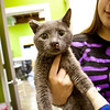 injured kitty, Angela Lozano, 09/30/10