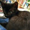 Grover, 09112010, oliviathompson