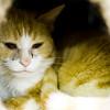 Krissy - Apr 22nd, 2011 - Menelaos Prokos