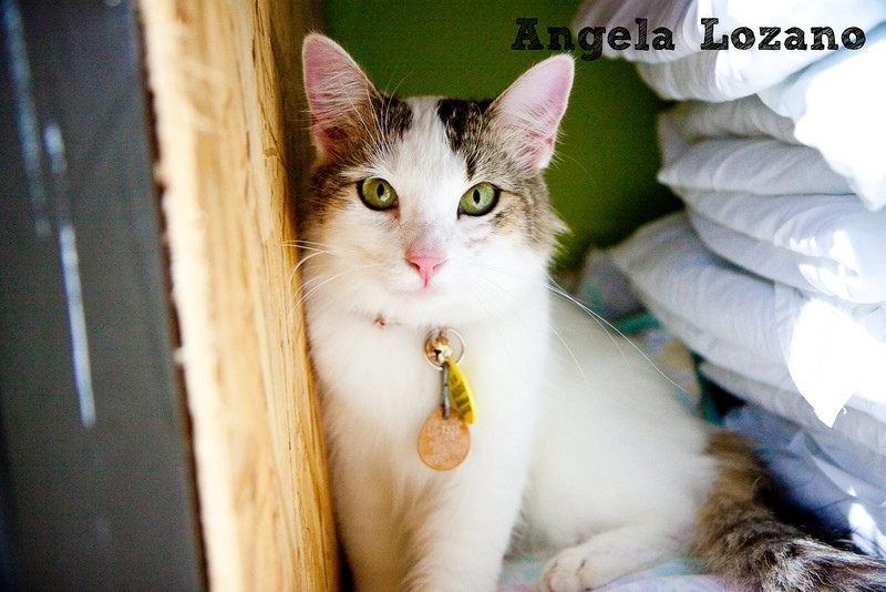 Asuka, Angela Lozano, 09/30/10