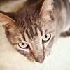 Mel-03.05.11-OliviaThompson