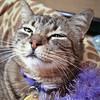 Tiger Lily-03.05.11-OliviaThompson