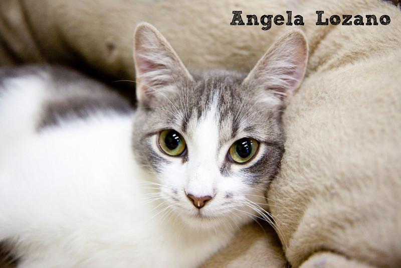 Goose, 09/29/10, Angela Lozano