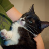 Bella (Ringworm foster) @ Tammie Brandon's<br /> -needed quit photos but kittens we in an 'unpleasant mood' may need to take new ones again sometime