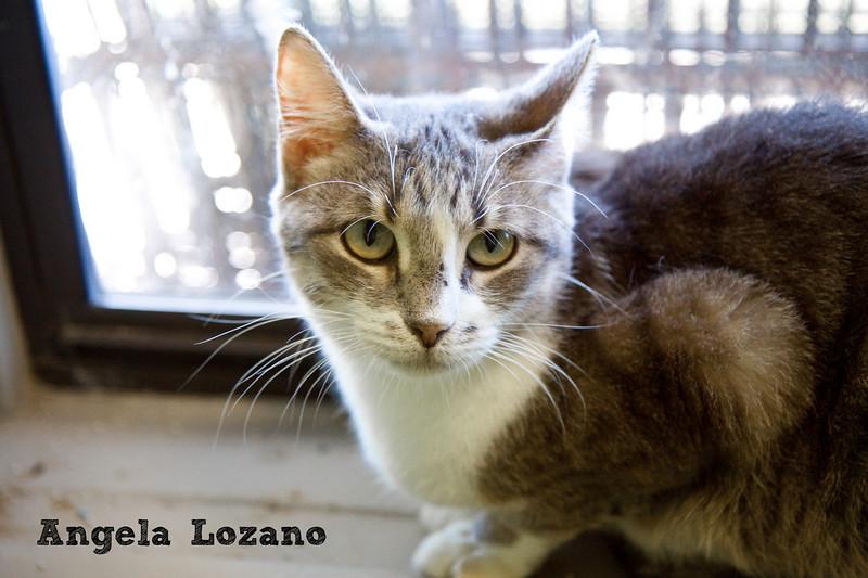 Ginny, Angela Lozano, 11/10/10