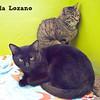 Minerva, Angela Lozano, 11/10/10<br /> Albus, Angela Lozano, 11/10/10