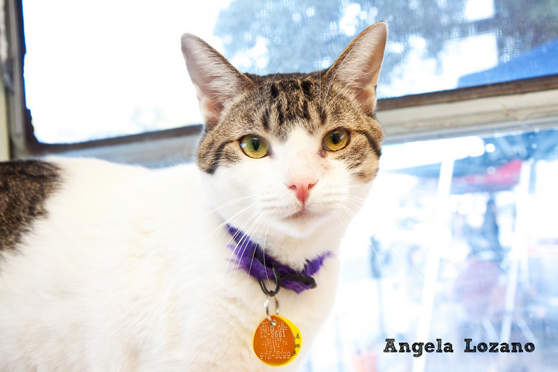 Mercury, Angela Lozano, 11/5/10