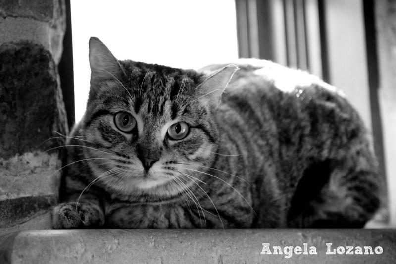 Anastasia, Angela Lozano, 12/1/10