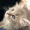 Georgette, 09112010, oliviathompson