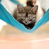 Pixel - 3/24/2012 - Kelly Hawkins
