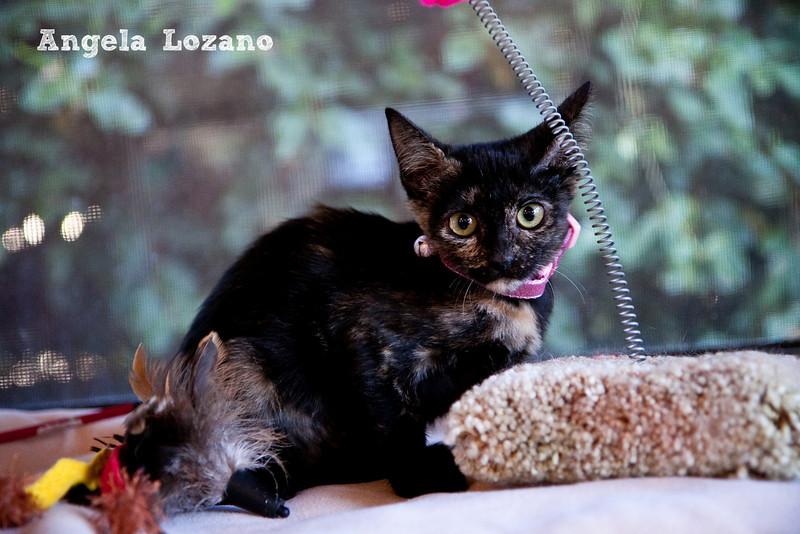 Lovey, Angela Lozano, 11/5/10