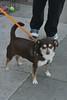 Louie 4/3/16 Kathi Miller