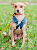 Lupe - 12/28/2015 - for foster