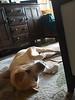 Lola - 10/28/2016 - foster