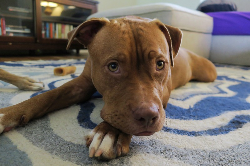 Monty - 5/26/2016 - for foster