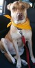 Roxy - 12/16/14 - for foster