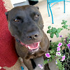 Otto - 8/16/14 -- Melinda Maclean (for foster)