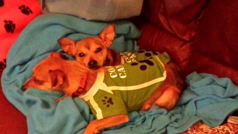 Penny Lane - 12/24/14 - for foster