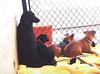 The tarrytown dogs!