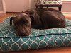 Shania - 12/20/14 - for foster