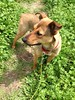 Mimi - 3/28/2015 - for foster