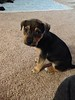 Sloan - 12/31/14 - for foster