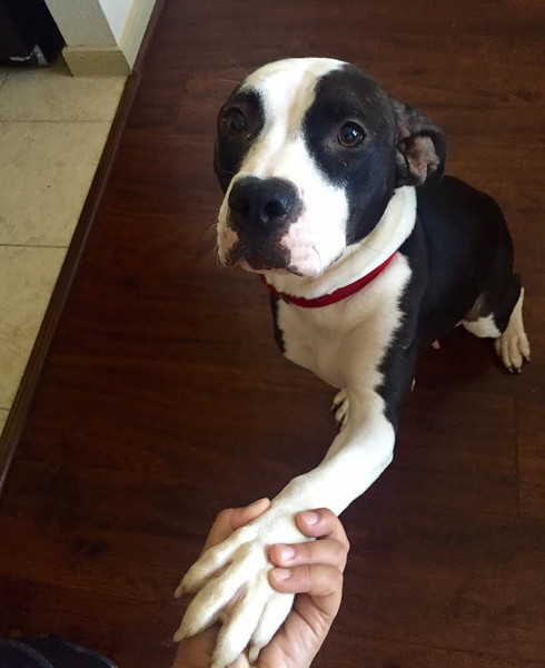 Luna - 8/7/2015 - for foster