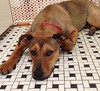 Mimi - 4/3/2015 - for foster