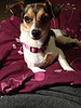 Moxie Roxie - 12/6/14 - for foster